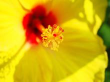 ゲット・ボディーバランスのブログ2-黄ハイビ
