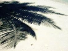 仙台マッサージ・ハワイアンロミロミマッサージ&ホットストーン(ポハク)&マタニティーロミ(妊婦マッサージ)  ハワイアンマッサージ専門店 ゲット・ボディーバランス-ハワイ ヤシ2