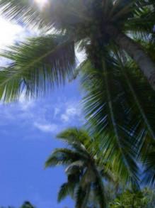 ロミロミ&ホットストーン&マタニティーロミロミマッサージ ハワイアンマッサージ専門店ゲットボディーバランス-ハワイ ヤシ