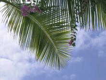 Hawaii写真